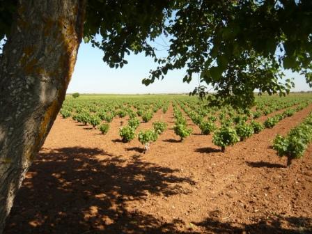 Madrid Wine Tour Vineyard